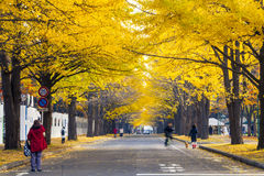 Sezon jesienny w jesień hokkaida uniwersytecie Obrazy Stock