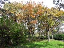 Sezon Jesienny w parku Fotografia Stock