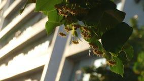 Sezon kwitnie wapno - zakończenie up zbiory