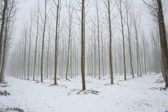 sezon zima Zdjęcie Stock
