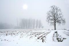 sezon zima Fotografia Stock