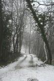 sezon zima Zdjęcia Stock