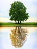 Sezon zmiana jesień lato Fotografia Stock