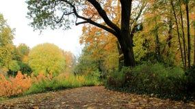 Sezon zmiany Spada liście W parku obrazy royalty free