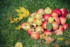 Sezonowa owoc, jesieni owoc - jesieni żniwo Zdjęcia Stock