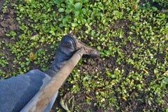 Sezonowa praca w jesień ogródzie Rolnik kopie ziemię obraz royalty free