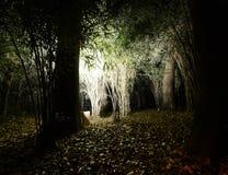 Sezonowe iluminacje wokoło bożych narodzeń przy Rikugien ogródem fotografia stock
