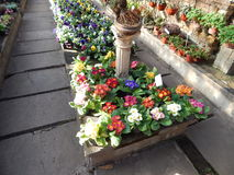 Sezonowi kwiaty Zdjęcia Stock