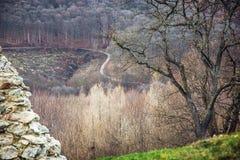 Sezonowy deciduous las i pusta droga fotografia royalty free