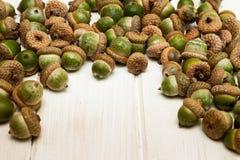 Sezonowy jesieni acorn tło obraz royalty free