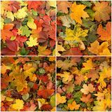 Sezonowy jesieni tło kolorowi liście Zdjęcie Stock