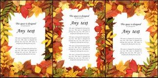 Sezonowy jesieni tło kolorowi liście Obraz Stock