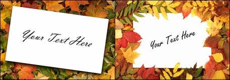 Sezonowy jesieni tło kolorowi liście Fotografia Stock