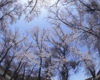 Sezonowy krajobraz zdjęcie stock