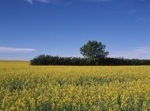 Sezonowy krajobraz fotografia royalty free