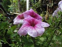 SEZONOWY kwiat Zdjęcie Royalty Free