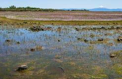 Sezonowy Vernal basen na plateau w Oregon obrazy royalty free