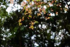 Sezonowy widok zdjęcie stock