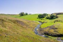 Sezonowy zatoczka bieg na zielenistej równinie północ stołu Halna Ekologiczna rezerwa, Oroville, Kalifornia fotografia royalty free