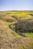 Sezonowy zatoczka bieg na zielenistej równinie północ stołu Halna Ekologiczna rezerwa, Oroville, Kalifornia fotografia stock