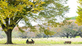 Sezonu jesiennego ginkgo liście w jesieni, Japonia Obraz Royalty Free