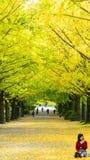 Sezonu jesiennego ginkgo liście w jesieni, Japonia Obrazy Royalty Free