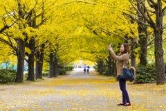 Sezonu jesiennego ginkgo liście w jesieni, Japonia Obrazy Stock