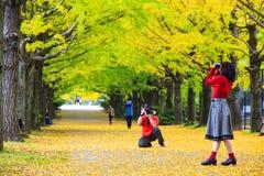 Sezonu jesiennego ginkgo liście w jesieni, Japonia Zdjęcia Royalty Free