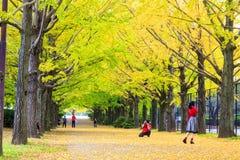 Sezonu jesiennego ginkgo liście w jesieni, Japonia Fotografia Stock