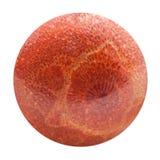Sfär från isolerad pressande röd korall Arkivfoton