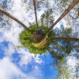 Sfäriska tält för panorama 360 grader 180 på att campa i skogen Fotografering för Bildbyråer