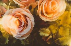 Sfałszowana bawełna wzrastał na rocznika stylu Fotografia Royalty Free