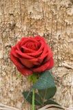 Sfałszowana czerwieni róża z liśćmi Zdjęcie Stock