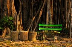 Sfałszowana drewniana ławka z Gumową rośliną w tle Obraz Stock