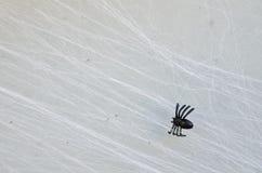 Sfałszowany mały Halloweenowy czarny pająk na sieci fotografia stock