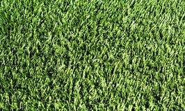 sfałszowana trawa Obraz Stock