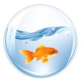 Sfera con il GoldFish in acqua Fotografie Stock Libere da Diritti