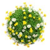 Sfera dell'erba verde con i fiori Fotografia Stock