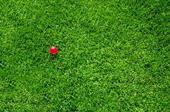 Sfera di colore rosa di erba verde Immagine Stock