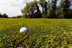 Sfera di golf nell'erba immagine stock libera da diritti