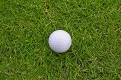 Sfera di golf su erba Immagini Stock