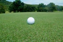Sfera di golf su verde Fotografia Stock