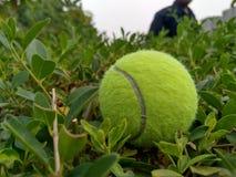 Sfera di tennis su erba fotografie stock libere da diritti