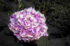 Sfera kształta kwiatu bukiet na ciemnym tle obrazy royalty free