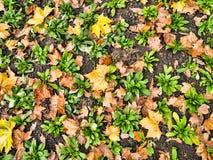 Sfera su erba Fotografia Stock