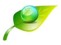 sfera sulla foglia verde isolata Fotografie Stock