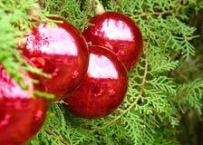 Sfere dell'albero di Natale fotografia stock