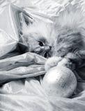 Sfere e gatto di natale Fotografie Stock Libere da Diritti