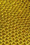 Sfere gialle Immagini Stock