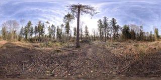 Sferisch panorama 360 graden in het bos Stock Foto